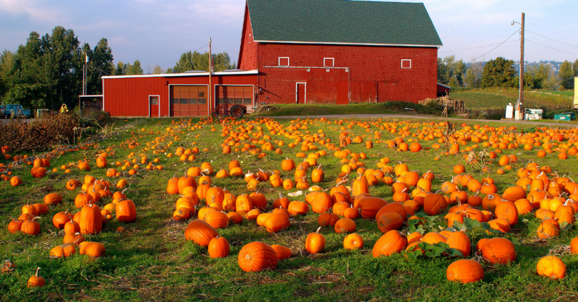 Barn with Pumpkins
